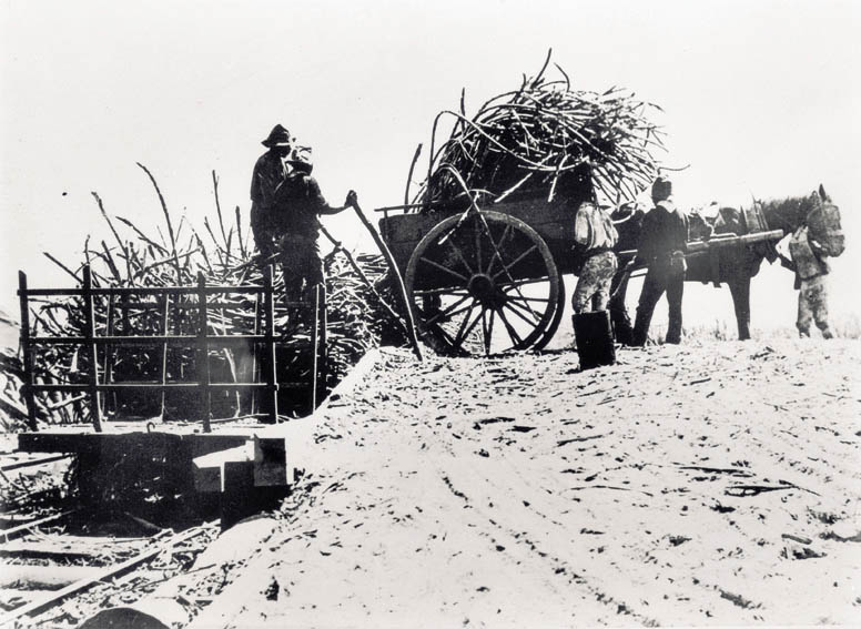 Pacific Islanders working at the Pioneer Company's sugar plantation